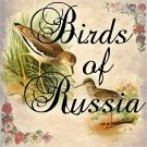 Birds of Russia