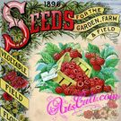 Seeds Catalogs