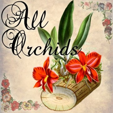 all orchids