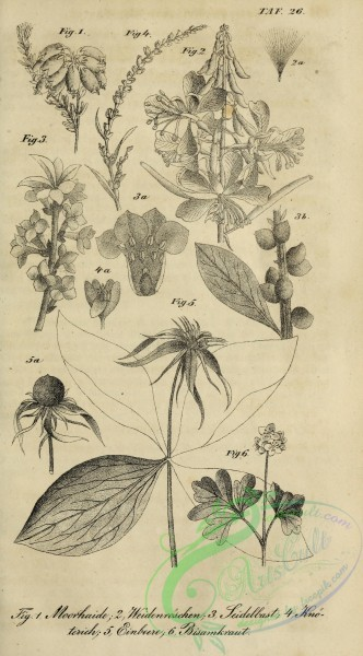 botanical-18706 - black-and-white 021-unspecified
