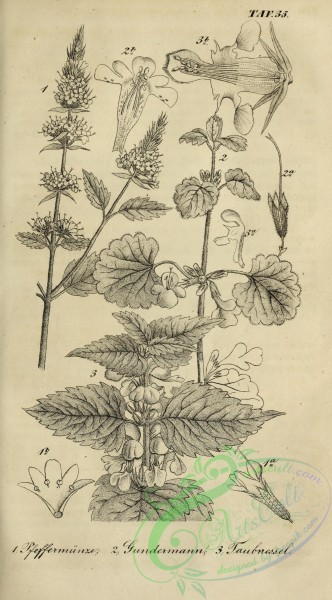 botanical-18715 - black-and-white 030-unspecified