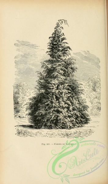 botanical-19249 - black-and-white 023-Cypressus