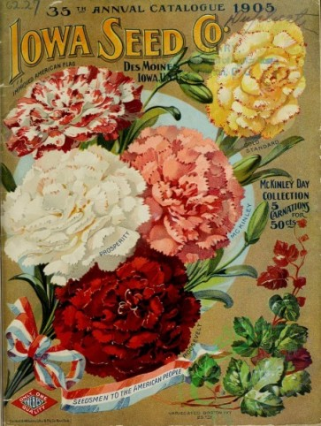 carnation-00233 - 061-Carnations, bow [2605x3453]