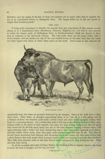 cassells_natural_history-00065 - 022-Chillingham Cattle