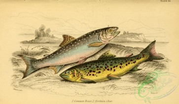 fishes_best-00215 - Common Trout, Northern Char