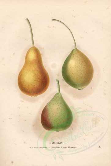 fruits-02745 - Pear, 2 [4100x6132]
