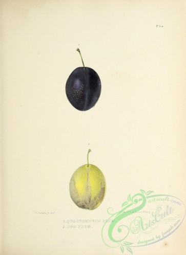 fruits-04322 - 006-Quackenbush Plum, Egg Plum
