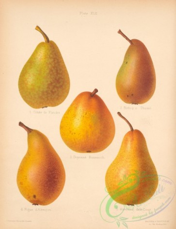 fruits-04806 - 012-Comte de Flandre Pear, Bishop's Thumb Pear, Doyenne Boussoch Pear, Figue d'Alencon Pear, Marechal dele Cour Pear