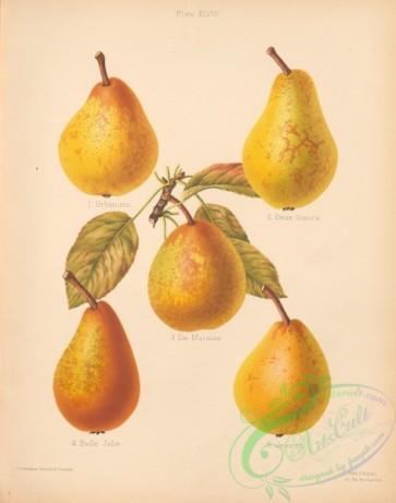 fruits-04812 - 018-Urbaniste Pear, Deux Soeurs Pear, De Maraise Pear, Belle Julie Pear, Jewess Pear