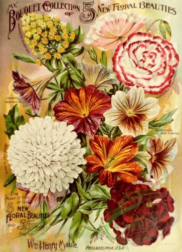 poppies_flowers-00117 - 031-Mignonette, Poppies, Salpiglossis, Aster, Phlox