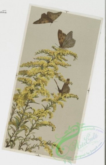 prang_cards_butterflies-00011 - 0254-Christmas and New Year cards depicting plants, flowers, and butterflies 104347