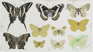 prang_cards_butterflies-00016 - 0337-Christmas and New Year cards depicting flowers and butterflies 105150