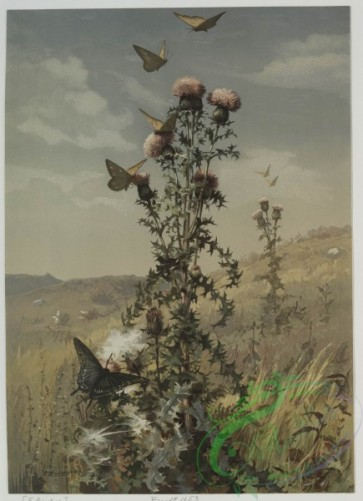 prang_cards_butterflies-00026 - 0500-Thistle and Landscape, Marsh Mallow 106294