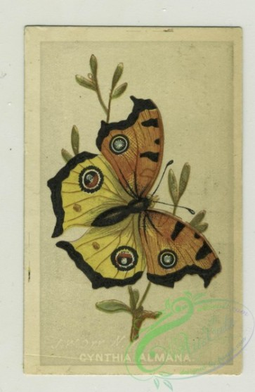 prang_cards_butterflies-00041 - 1330-Trade cards depicting butterflies, children and adults posting signs for sulphur borax soap 101265
