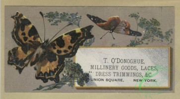 prang_cards_butterflies-00051 - 1604-Trade cards depicting flowers, butterflies, a chocolate stand, a lake and boating 102573