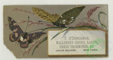 prang_cards_butterflies-00058 - 1763-Trade cards depicting butterflies, holly, flowers, plants, strawberries, cows and birch bark 103539