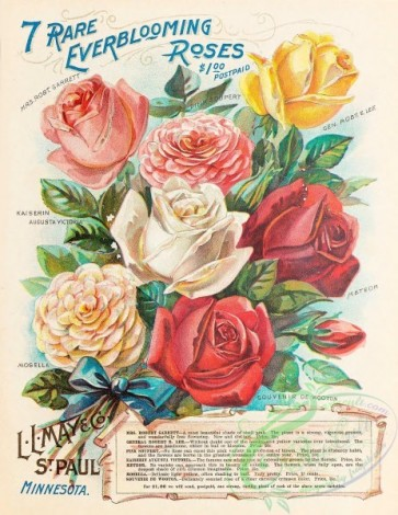 seeds_catalogs-00026 - 026-Everblooming Roses [3310x4281]