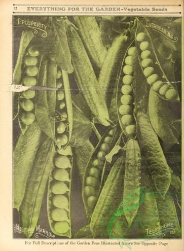 seeds_catalogs-00040 - 040-Pea [2627x3578]