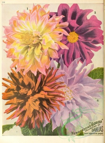 seeds_catalogs-00047 - 047-dahlias [2627x3578]