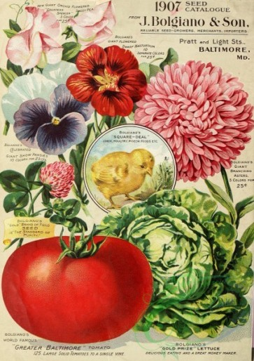 seeds_catalogs-00308 - 087-Pansies, Sweet Pea, Aster, Nestling, Tomato, Cabbage, Frame, round, Clover [2481x3508]