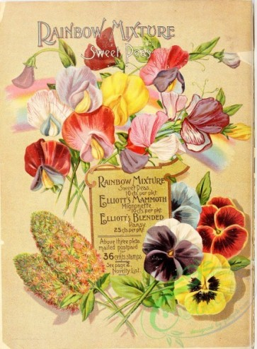 seeds_catalogs-00558 - 054-frame, pansies, Sweet Pea [2712x3685]
