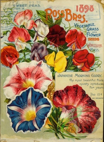 seeds_catalogs-03418 - 047-Morning Glory, ipomoea, Sweet Pea [2727x3686]