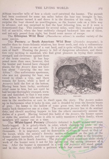 the_living_world-00480 - 507-Peccary