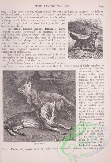 the_living_world-00554 - 581-Coyote, Gray Wolf