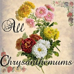 all chrysanthemums