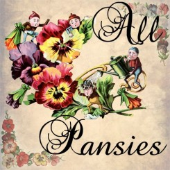 all pansies
