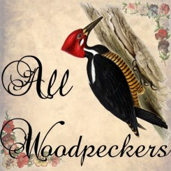 all woodpeckers