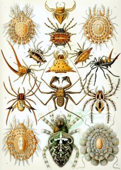 animals_collages-00014 - Arachnida [2369x3326]
