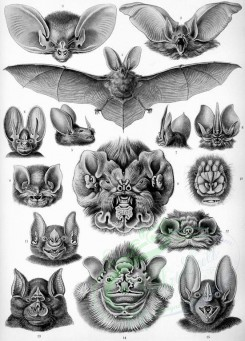 animals_collages-00031 - Chiroptera [2314x3220]