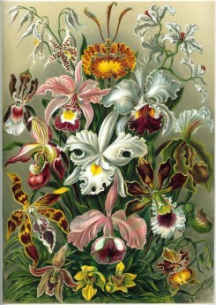 animals_collages-00083 - Orchidae [2360x3324]