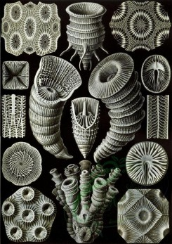 animals_collages-00108 - Tetracoralla [2304x3261]