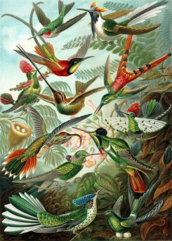 animals_collages-00117 - Trochilidae [2359x3308]