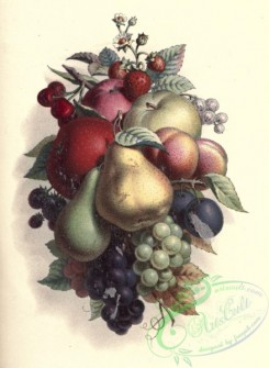 apple-04274 - Grapes, Pear, Apple, Strawberry