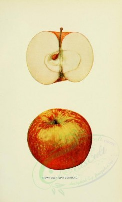 apples-00090 - Apple, 090 [2068x3416]