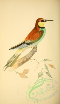 bee_eaters-00021 - Bee-Eater