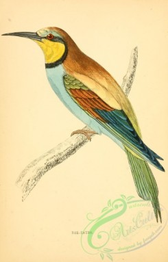 bee_eaters-00028 - Bee-eater