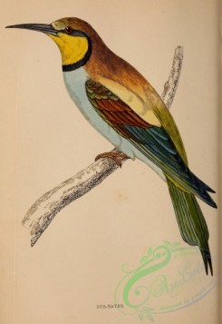 bee_eaters-00038 - Bee-Eater