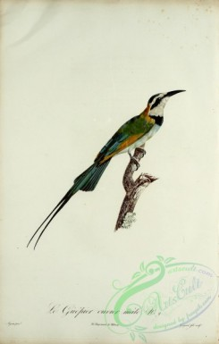 bee_eaters-00042 - Bee-eater, 10