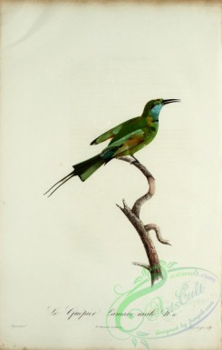 bee_eaters-00043 - Bee-eater, 11