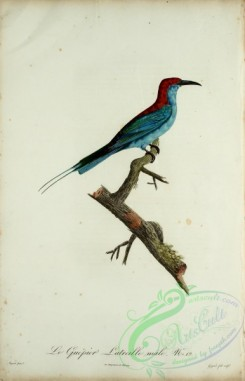 bee_eaters-00045 - Bee-eater, 13