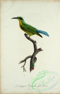 bee_eaters-00047 - Bee-eater, 15