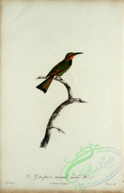 bee_eaters-00050 - Bee-eater, 18