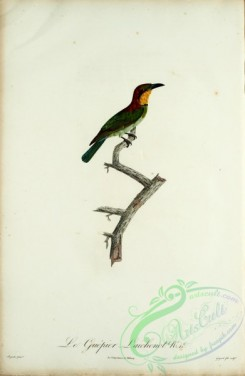 bee_eaters-00051 - Bee-eater, 19