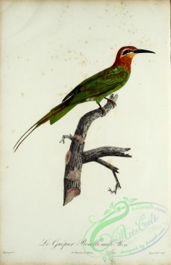 bee_eaters-00053 - Bee-eater, 20