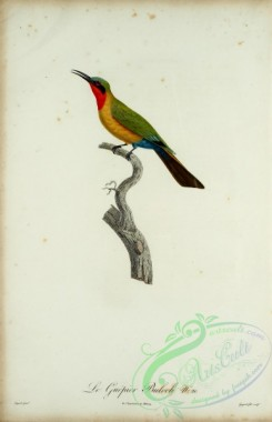 bee_eaters-00054 - Bee-eater, 21