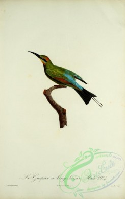 bee_eaters-00055 - Bee-eater, 4